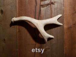 X-Large Real Antler Door Handle Pull Slide Barn Door Gate Man Cave Gun Room Hunting Lodge Cabin Log Home Tree House Mule Sheds